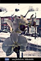A view from my window and my Orchid by unitedcba