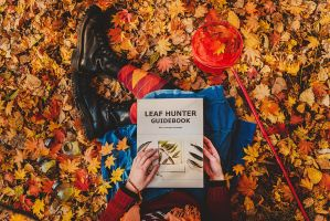 Leaf Hunter Guidebook 2 by dinabelenko
