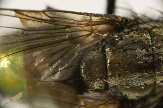 A fly...up close 3 by Egg-Salad