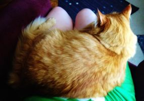 I've missed these lap naps... by Shutter-Bug1