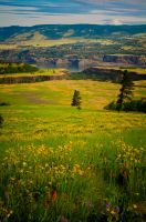 Tom McCall Preserve by DrisanaPecado