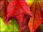 Autumn Leaves Colors by MichiLauke