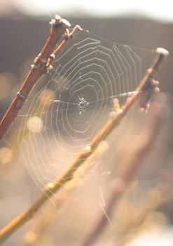 spider s web by roughhand