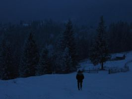 Nocturnal Path by mihhexe