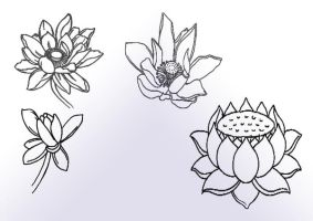 lotus flowers by posvibes