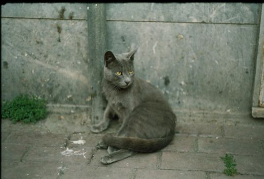cat by wopsow