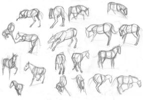 Horse studies with videoreference by sofmer