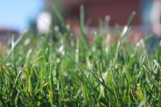 Blades of grass by Blackiespots