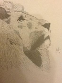 Lion by seanutbrittles