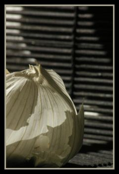 garlic- texture and line by justmebuzzabe
