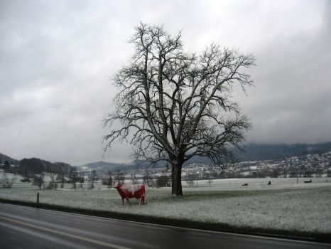 Swiss Cow by PeterPanCH