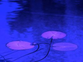James-sahn-water-lillies by jamessahn