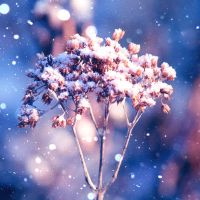 Wondrous Winter by incolor16