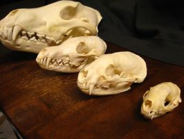Skull collection by TieWolf