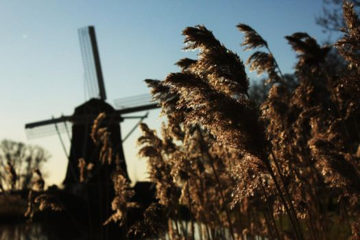 The Windmill and The Wheat by Telestic