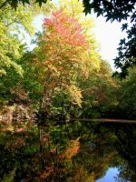 Fall Pictures 38 by FairieGoodMother