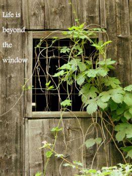 Life is beyond the window by florina23