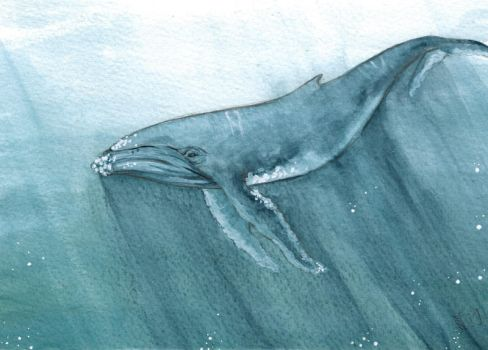 Whale by Lychnobia