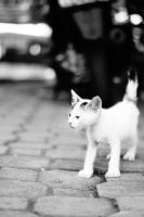 Urban Whiskers | #2 by transcendevoyage