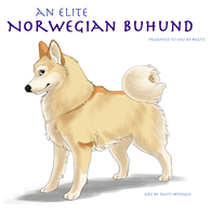FP Comm - Buhund by swift-whippet