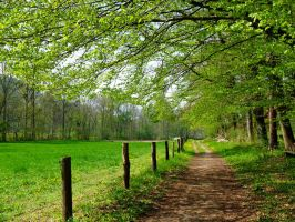 my way into the spring by Dieffi