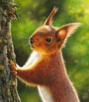 Red Squirrel Painting by EsthervanHulsen