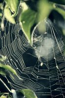 web by CityColors