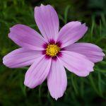 flower 126 by EphemeralMind