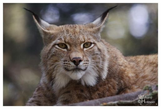 Lynx - The look by W0LLE