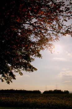 indian summer by Sonja-Marie