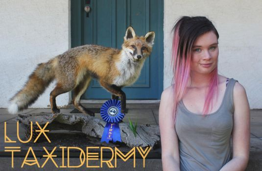 Competition Fox by LuxTaxidermy
