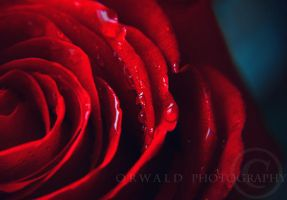 RED by Orwald