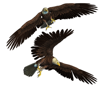 Eagles PNG Stock by Roy3D