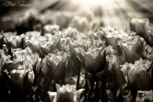 I wish your shadows come just from light!! by Phototubby
