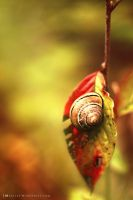Autumnal snail by luxuss