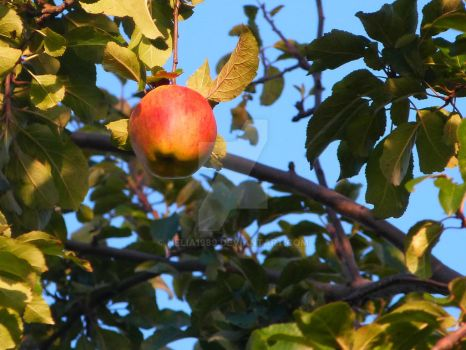 one apple a day... by Nelia1989