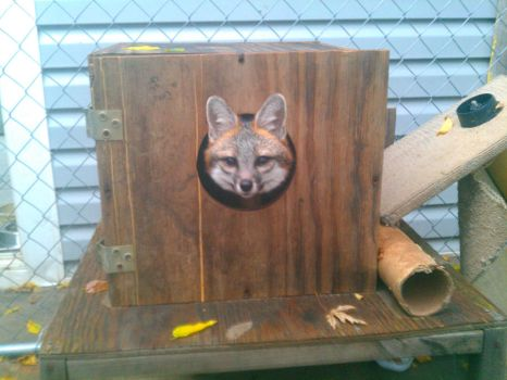 Box Fox by DashRendar100