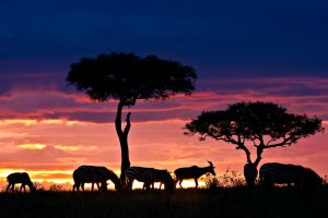 My Africa 26 by catman-suha