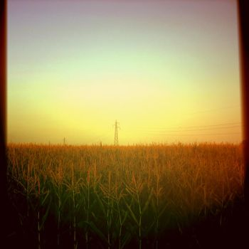 field by AlessandroAnsuini