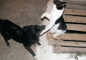 Cat vs Dog by 5tork
