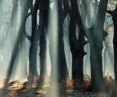 In the enchanted forest again by jchanders