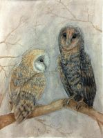 Hibou by thatwillowkid
