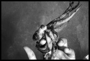 love for an octopus by crazyormental