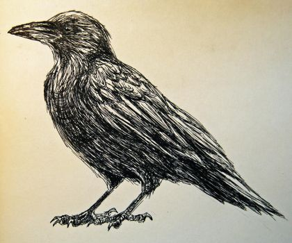 Raven Sketch by Prof-Dr-Dr-Weird