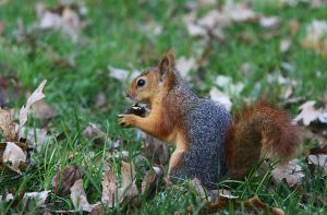 Squirrel by sunandcloud