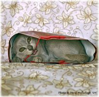 The Cat in the Bag by substar