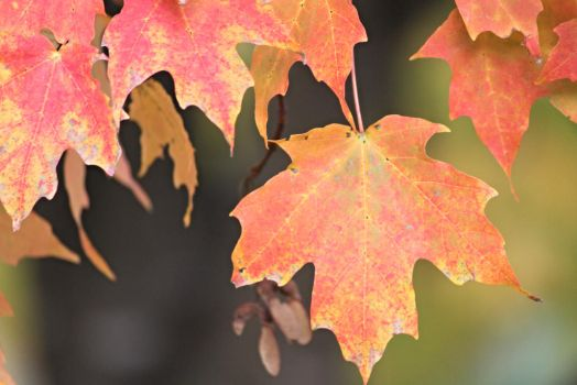 Fall Leaves 2 by TimeElf