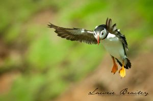 Coming in to Land by Chikrata