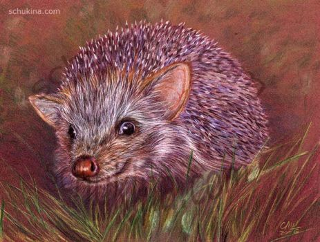 Funny Hedgehog by sschukina