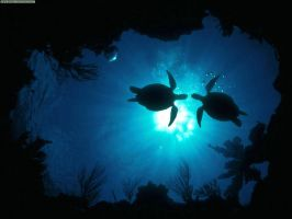 sea turtles - beneath view by BadgeRizzle